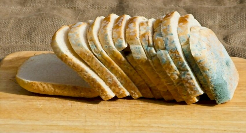 What happens if you eat moldy bread